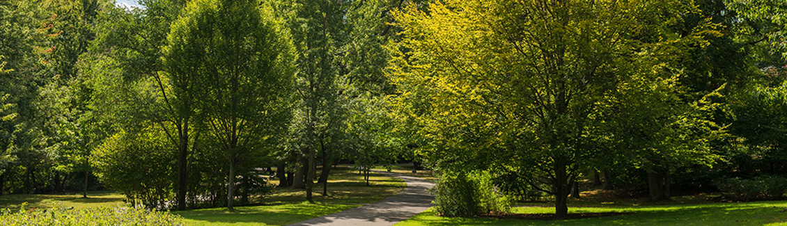 emerald necklace olmsted tree society