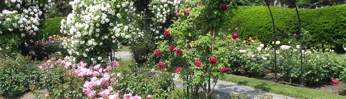 emerald necklace kelleher rose garden