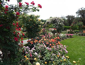 Kelleher Rose Garden